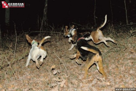 A cast of three nite-champion hounds is released on the first drop of the evening during last spring's Georgia State Nite Hunt in Oconee County.