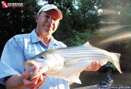 Cy Grajcar with Extreme Stripers Guide Service boated this nice striper on a peaceful morning, fishing on the Coosa River.