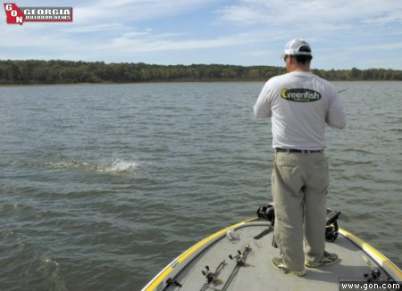 Clarks hill bassin in november centers around the bait for Clarks hill fishing report